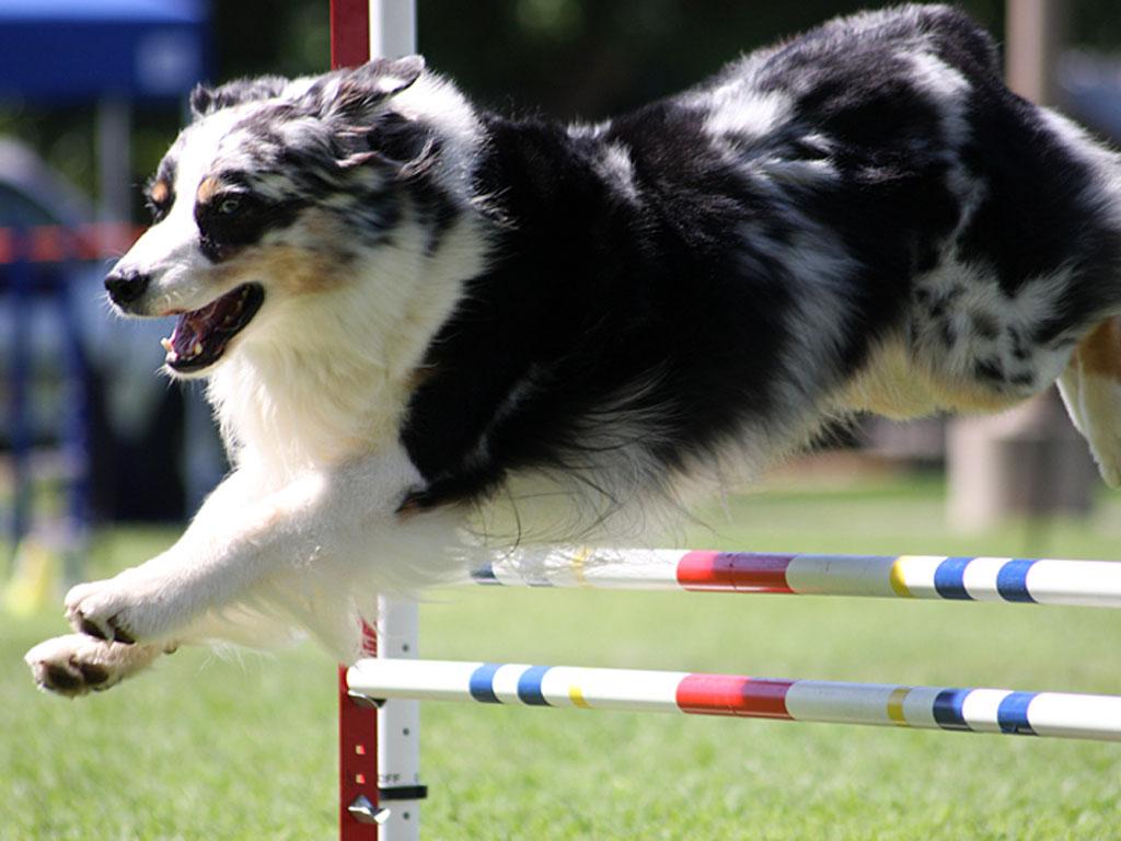 agility-hundesport