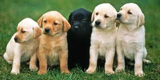 hund anschaffen checkliste